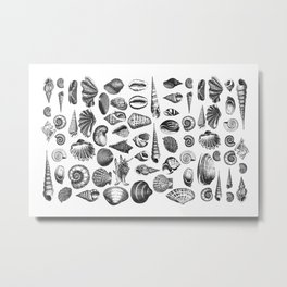 Vintage Sea Shell Drawing Black And White Metal Print