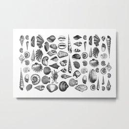 Vintage Sea Shell Drawing Black And White Metal Print