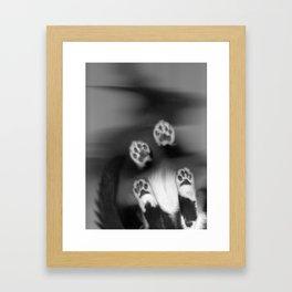 Cat Scan II Framed Art Print