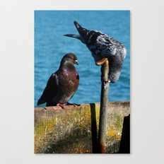 Drinking Pigeons Canvas Print