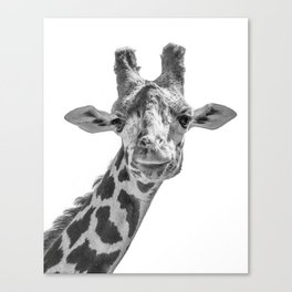 Giraffe | Peek-A-Boo | Animal Photography | Minimalism | Mammal | Wildlife | Nature Canvas Print