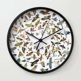 Bird, Birds, Birds Wall Clock