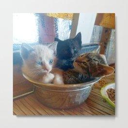 Three Kitties One Bowl Metal Print