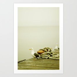 Sea Gull Art Print