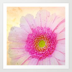 Gebera Texture Art Print