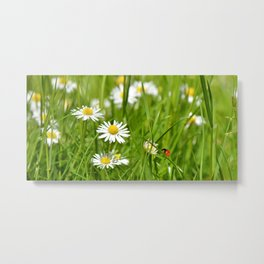 Summer meadow 76 Metal Print