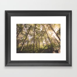woodland 3428 Framed Art Print