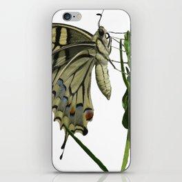 Scarce Swallowtail iPhone Skin