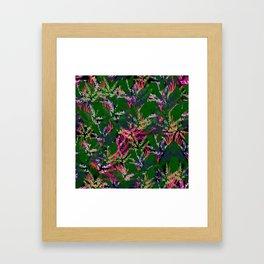 Vibrant Tropical Framed Art Print
