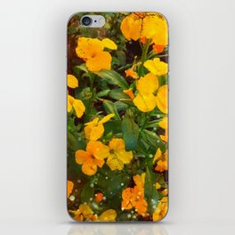 Golden Wallflowers iPhone Skin