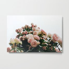 Climbing Roses at International Rose Test Garden Metal Print