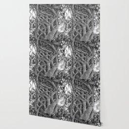 Tangled strangler fig Wallpaper