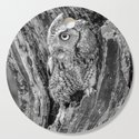 Echo the Screech Owl by Teresa Thompson by teresathompson