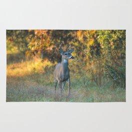 October Buck Rug