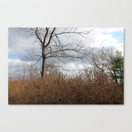 Bunch of Branches Canvas Print