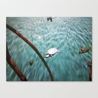 turtle Canvas Prints featuring TURTLE by JANUARY FROST