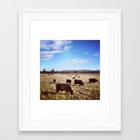 cows Framed Art Prints featuring Cows by Aaron Spicer