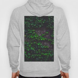 Green Ivy on the Brick Wall (Color) Hoody
