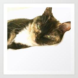 Kitty Stink Eye Art Print