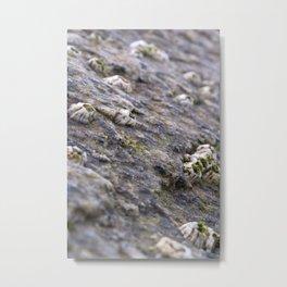 ahh barnacles Metal Print