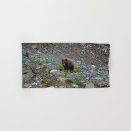 Black bear cub in Jasper National Park | Alberta Hand & Bath Towel