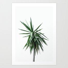 Palm Trees 11 Art Print