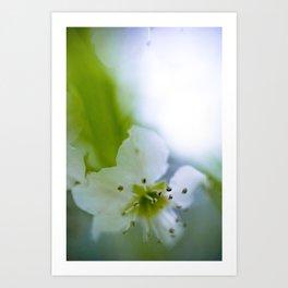 Detail Blossom - Garden in Spring - Floral Photography - Light Green Botanical Flower Print  Art Print