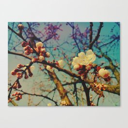 last day of sping Canvas Print
