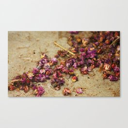 Dried Flowers Canvas Print