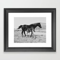 Horse and Her Foal Framed Art Print