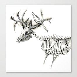 Deer Skeleton Sketch Canvas Print
