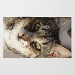 Tabby Cat Kitten Giving Eye Contact Rug