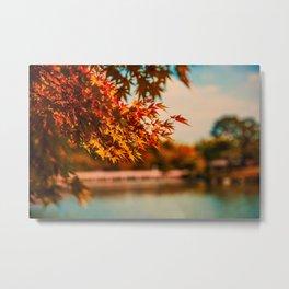 Autumn Scene (Color) Metal Print