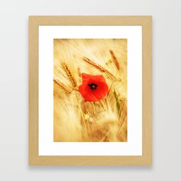 Poppies in the cornfield Framed Art Print