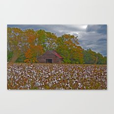 An Old Barn in a Cotton Field Canvas Print