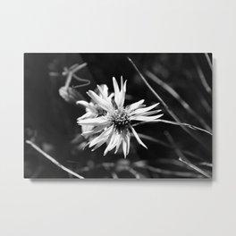 Small Wildflower B&W Metal Print