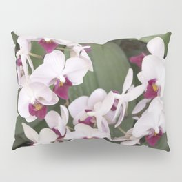 Longwood Gardens Orchid Extravaganza 1 Pillow Sham