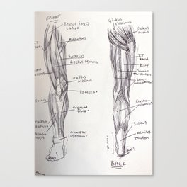 Leg Anatomy Canvas Print