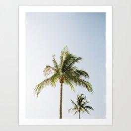 Two Seaside Palms / Florida Fine Art Film Photography Art Print
