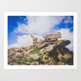 Goat Series, I Art Print