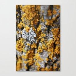 Nature7 Canvas Print