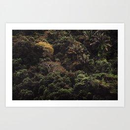Tijuca Forest nº 21 Art Print
