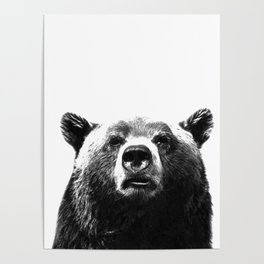 Black and white bear portrait Poster