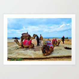 Camels in Morocco Art Print