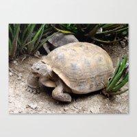 tortoise Canvas Prints featuring Tortoise by lennyfdzz