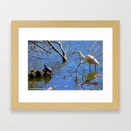Egret and Turtle: Opposites Attract (Chicago North Pond Collection) Framed Art Print