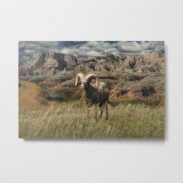 Bighorn Ram Sheep on a grassy ridge edge in the Badlands Metal Print