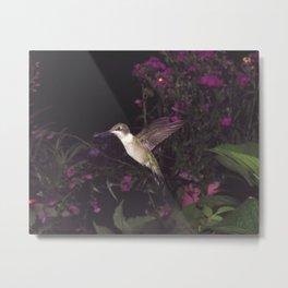 hovering hummingbird 20 Metal Print