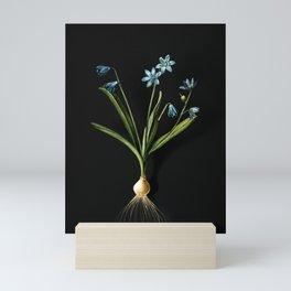 Vintage Scilla Amoena Botanical Illustration on Black (Portrait) Mini Art Print