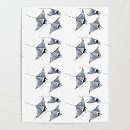 Manta ray devil fish Poster